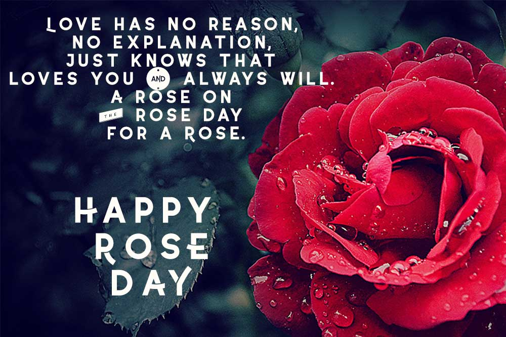 Happy Rose Day Messages SMS Status for My Love
