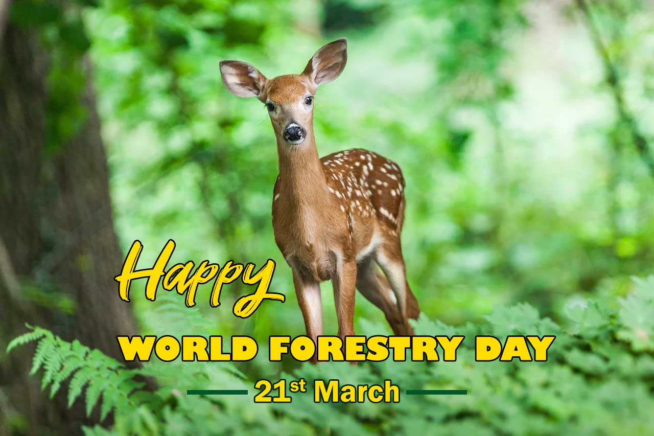 International Day of Forests Quotes