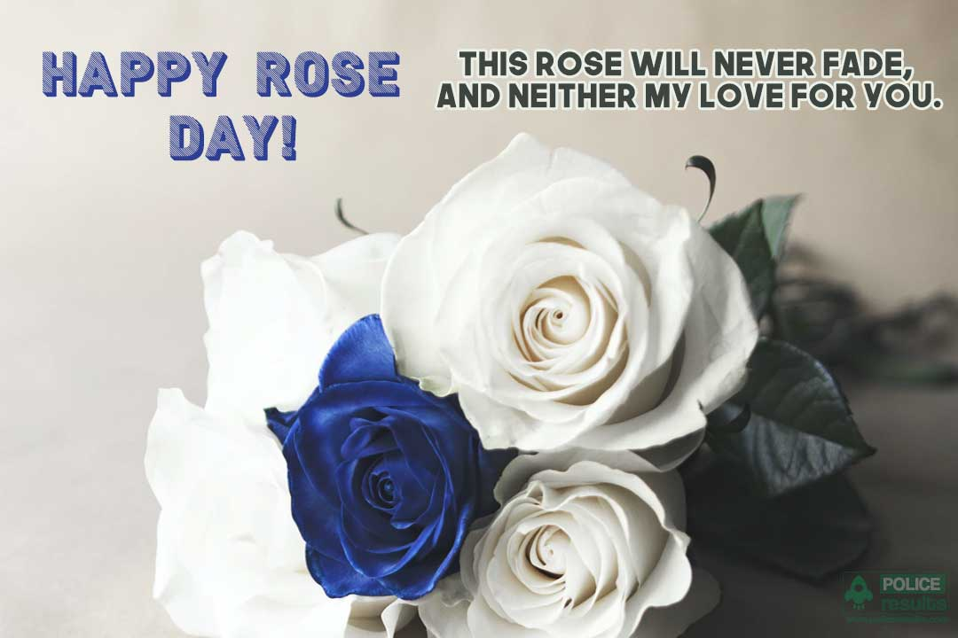 Rose Day Wishes Pic Status for Boyfriend/ Girlfriend