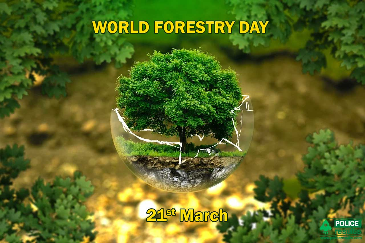 World Forestry Day 2020 : Theme, Slogan, Poster, Quotes, Images, Messages, Significance, History and Awareness Program