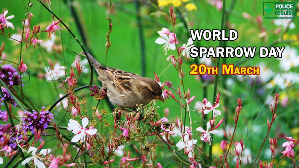 World Sparrow Day 2020 : Messages, Sayings, Greetings, Status
