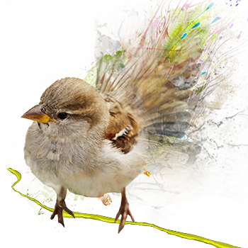 World Sparrow Day 2020: Current Theme, History and Significance