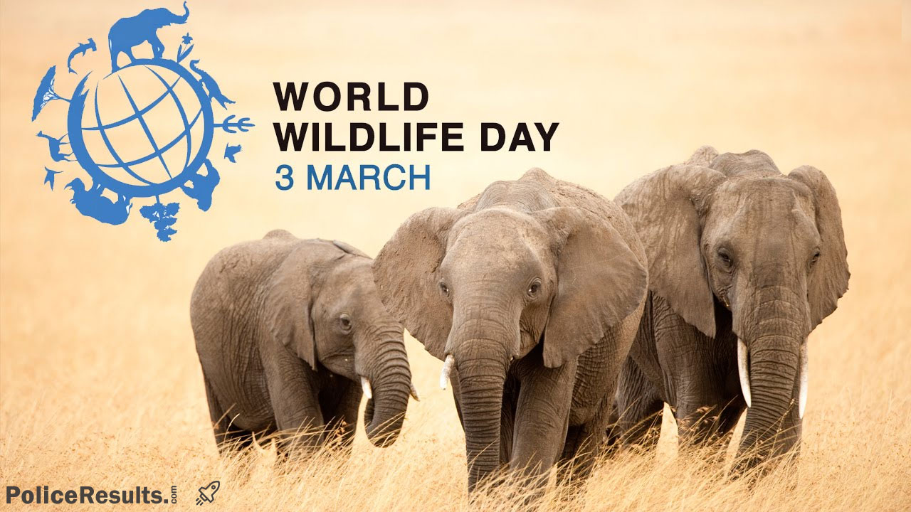 World wildlife day 2020 quotes, images, WhatsApp status